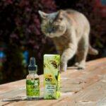 CBD Oil for Cats