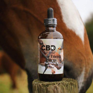 CBD hemp Oil for horses